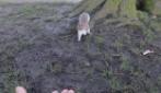 Lo scoiattolo di Peter Pan nel parco di Kensington Gardens (Londra)