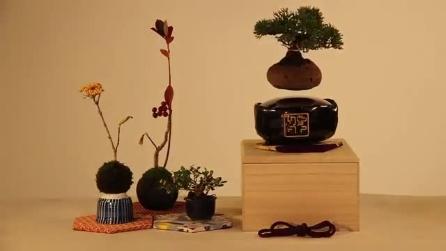 Bonsai fluttuante: non è un'allucinazione, ecco come avviene
