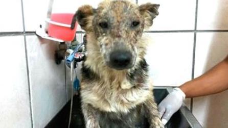 Il cucciolo fa un bagno per la prima volta: la storia che ti commuoverà