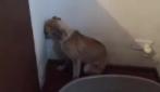 Non aveva più fiducia negli esseri umani: le toccanti immagini di un cucciolo maltrattato