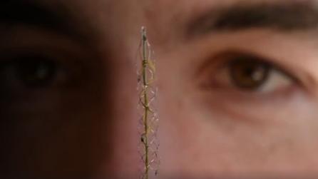 Questo piccolo oggetto potrebbe far camminare di nuovo le persone paralizzate