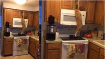 Cosa non sarebbe disposto a fare questo gatto per le sue crocchette