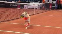 Cani raccattapalle in campo, il torneo di tennis per gli amanti degli animali