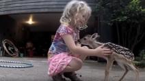 La tenera amicizia tra la bimba e il piccolo cerbiatto