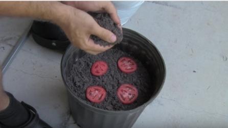 Poggia le fette di pomodoro nel terreno: ecco cosa accade dopo pochi giorni