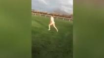Un uomo corre nudo sulla pista dei cavalli: il motivo è sorprendente