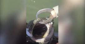 Nota che qualcosa si muove nella bocca del pesce: estrae un serpente velenosissimo