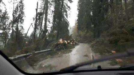 """""""Fatta una strage"""", un uomo passa con l'auto tra centinaia di alberi spezzati dal vento"""