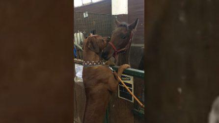Il cane si avvicina al cavallo: l'amicizia più tenera e spontanea al mondo