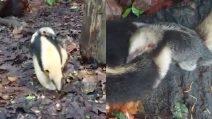Il piccolo formichiere si aggrappa al fratello maggiore per scoprire il bosco: una scena tenerissima