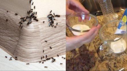 Come tenere lontane le formiche usando solo due ingredienti