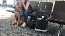 Si accorge che la padrona ha un attacco di panico: la reazione del cane vi stupirà