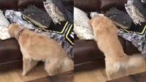 Cosa si nasconde sotto le coperte? La tenera reazione del cane quando lo scopre