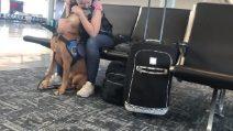 Ragazza viene colta da un attacco di panico: la reazione del suo cane è emozionante