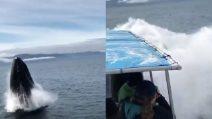 In visita tra i ghiacciai: spunta qualcosa di enorme dall'acqua, paura ed emozione tra i turisti