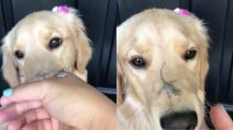 """""""Ripeti dopo di me: le lucertole sono amici, non cibo"""": l'insegnamento al cucciolo è tenerissimo"""