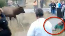 Alce attacca improvvisamente un uomo: si scatena il panico