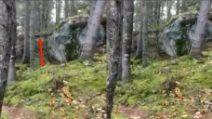 """La foresta """"respira"""", il terreno si solleva improvvisamente per poi abbassarsi"""