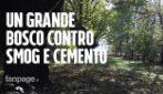 """La sfida di Giancarlo: a 86 anni pianta 11mila alberi su un terreno edificabile: """"Basta cemento"""""""