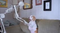 Scherzo di Halloween al cane: la sua reazione è tutta da ridere