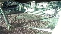 Terremoto Centro Italia, la devastante scossa vista da una telecamera a 50 km dall'epicentro