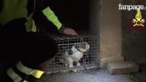 Terremoto Norcia, gatti abbandonati nella zona rossa: il salvataggio dei Vigili del Fuoco