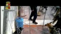 Lancia i cani in aria e li colpisce con una mazza: video choc incastra 44enne