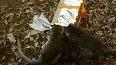 Il macaco e il cervo fanno sesso 'consenziente': esiste l