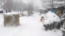 Acqua e fieno ricoperti di neve: ad Amatrice è emergenza per gli allevatori