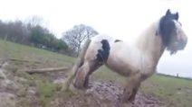 Il cavallo è rimasto impigliato nella recinzione: le immagini del salvataggio