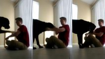 Il cane interrompe una crisi compulsiva: l'animale assiste la padrona con la sindrome di Asperger