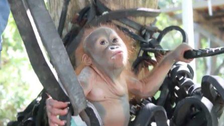 Salvato, il piccolo Didik si arrampica per la prima volta: la scena è dolcissima