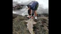 Lo squalo spiaggiato è in difficoltà: il ragazzo dimostra un grande coraggio e lo aiuta