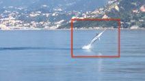 Sente uno strano tonfo in mare: l'esperienza incredibile nelle acque di Ventimiglia