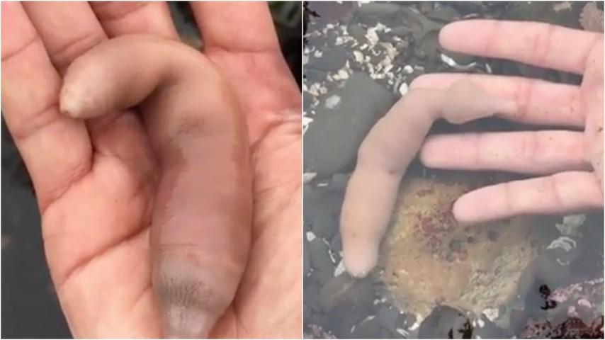 forme insolite del pene
