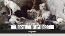 """Davide, l'italiano che salva i cani dal festival di Yulin: """"Li compro per non farli finire in padella"""""""
