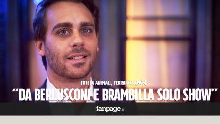 """Tutela degli animali, Ferraresi (M5S): """"Da Berlusconi e Brambilla solo show mediatici"""""""