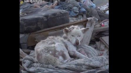 Trovano una cagnolina abbandonata in una discarica: la nuova vita della dolce Miley