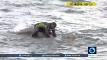 Elefante in mare rischia di annegare: le operazioni di salvataggio