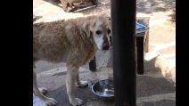 Antonella Clerici e l'amore per il cane Oliver