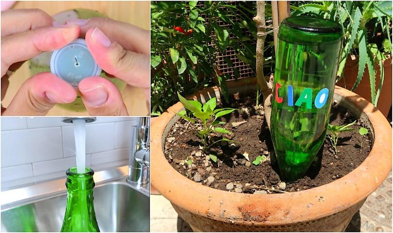 Bottiglia Du0027acqua Rovesciata Nella Pianta: Il Trucco Utile Quando Sei In  Vacanza