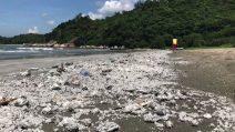 A Hong Kong spiagge devastate da enorme chiazza di olio di palma