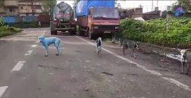 Il mistero dei cani blu in India