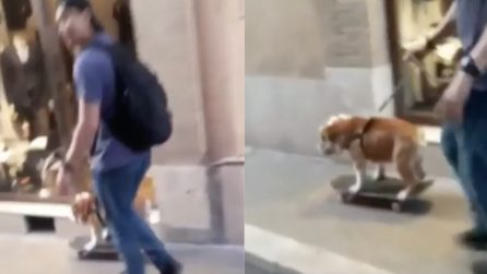 "Roma, trasporta il cane in strada, i passanti sotto shock: ""The dog è top"""