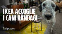 A Catania i cani randagi hanno un nuovo rifugio contro il freddo: il negozio IKEA