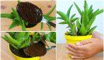 Come preparare un perfetto concime per le tue piante