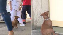 Il padrone è al pronto soccorso e il cane si rifiuta di allontanarsi: la scena è commovente