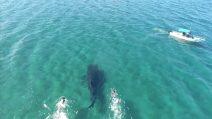 Capodanno in Messico, il bagno dei turisti con lo squalo balena