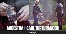 Addestra i cani con strumenti di tortura, le reazioni dei passanti [Esperimento sociale]