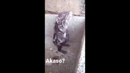 Il topo che si fa la doccia